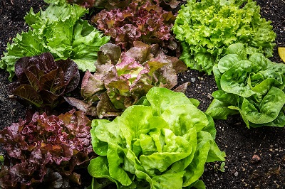 Create Your Own DIY Summer Salad Garden